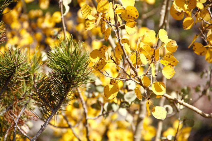 Natural Help for Allergy Sufferers