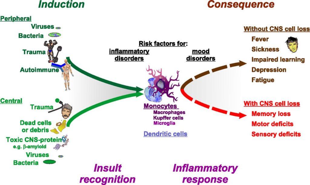 Immune system and social behavior