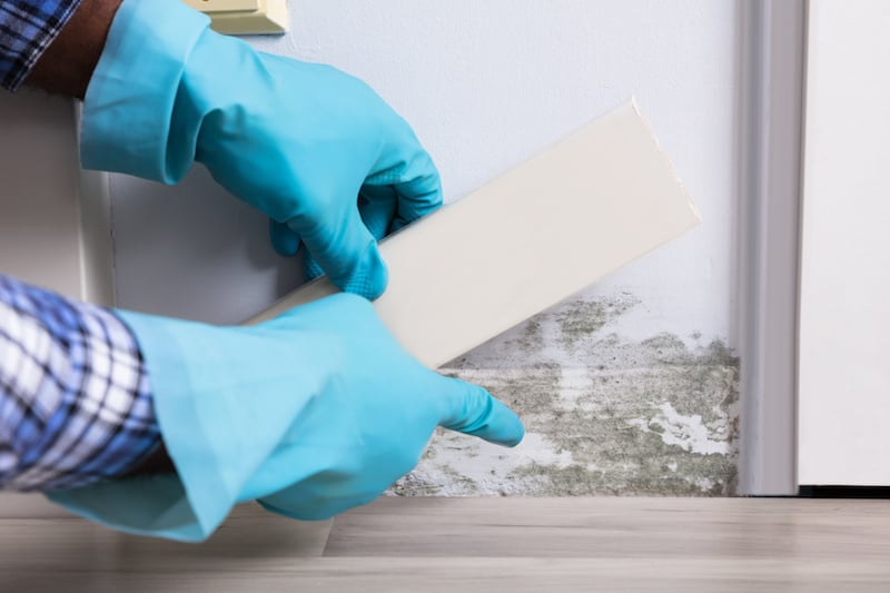 Five Essential Tips For Living With Mold Toxicity and CIRS